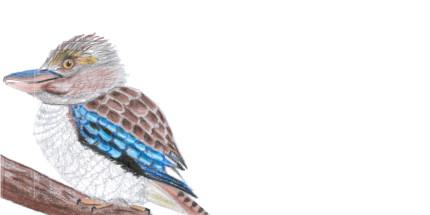 Envelope Kookaburra