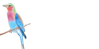Envelope Lilac Breasted Roller