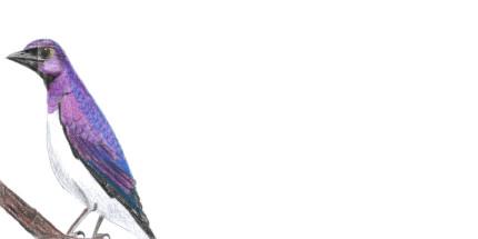 Envelope Plum Coloured Starling