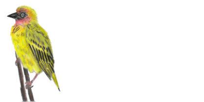 Envelope Cape Weaver