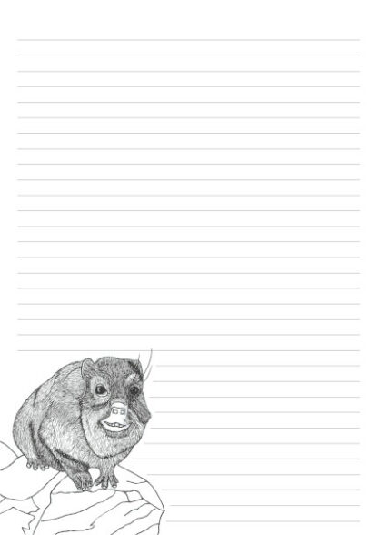 Colouring in picture of a Dassie on a 32 line A4 page