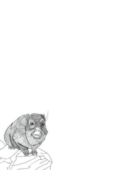 Colouring in Picture of a Dassie on an A4 page for letterwriting