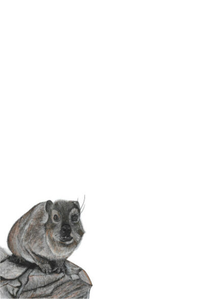 Picture of a Dassie on an A4 page for letterwriting