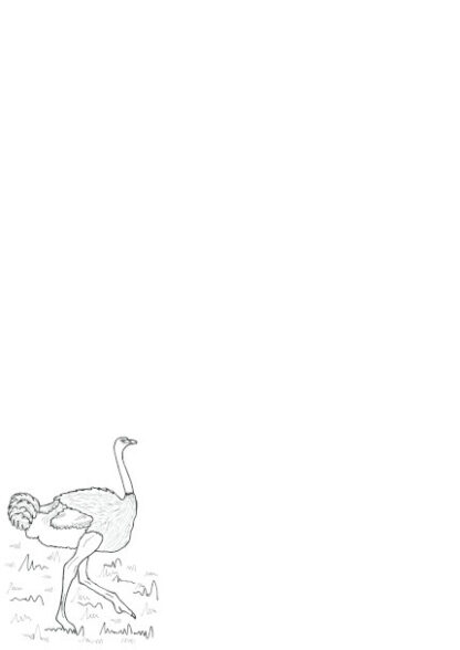 A4 page with a colouring in picture of an Ostrich on the bottom left of the page.