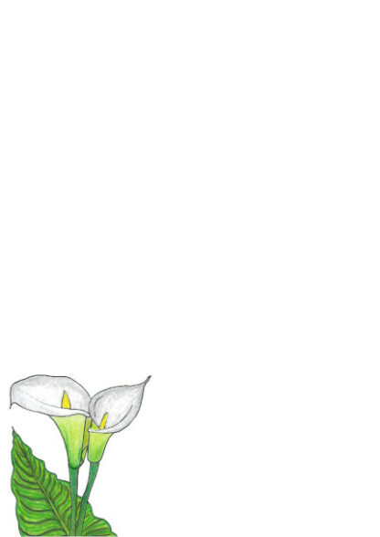 A4 White Lilly With Colour