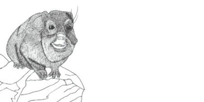 Colouring in Picture of a Dassie for printing on a DL envelope