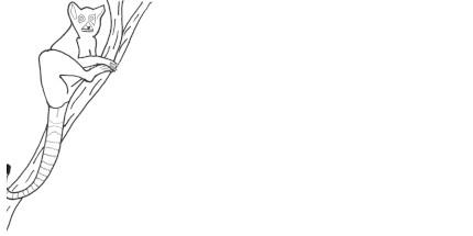 Envelope Ring Tailed Lemur