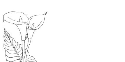 Envelope White Lilly