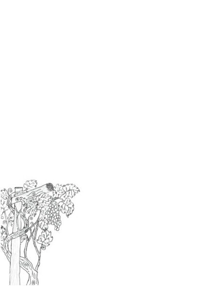 Picture of hand drawn grape vine as a colouring in picture on a A4 page for printing.