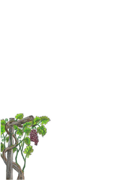 Picture of hand drawn grape vine on a A4 page for printing.