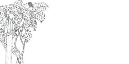 Picture of hand drawn grape vine as a colouring in picture on a DL envelope.
