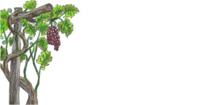 Picture of hand drawn grape vine on a DL envelope.