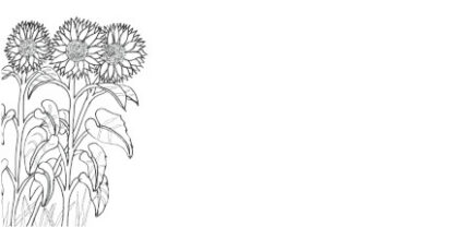 Hand drawn sunflowers as a colouring in picture on a DL envelope.